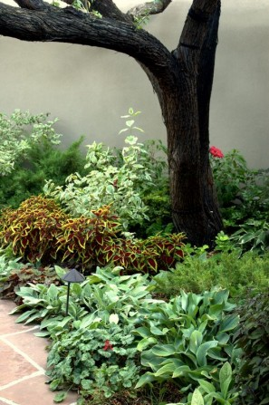 perennials with annuals, variegated plants, coleus, hosta, lambs ear, patio