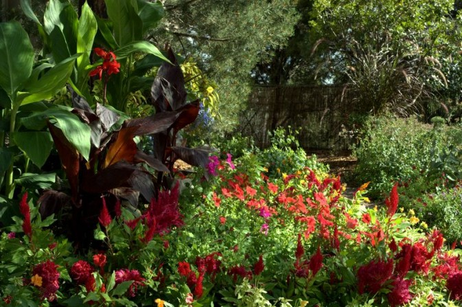 cana lilies, annuals, jungle, colorful flowers, flagstone, patio,