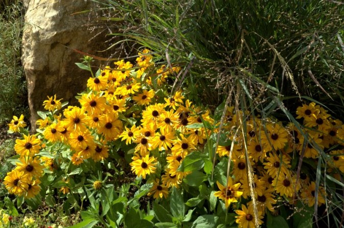 daisies, boulders,grasses, flower combinations