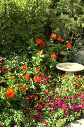 birdbath, zinnias, dalias, annauls, garden color, ceramic birdbath,