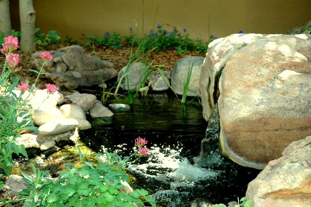 fountain, water feature, stream, stream bed, pond, bishops weed, water, babbling brook
